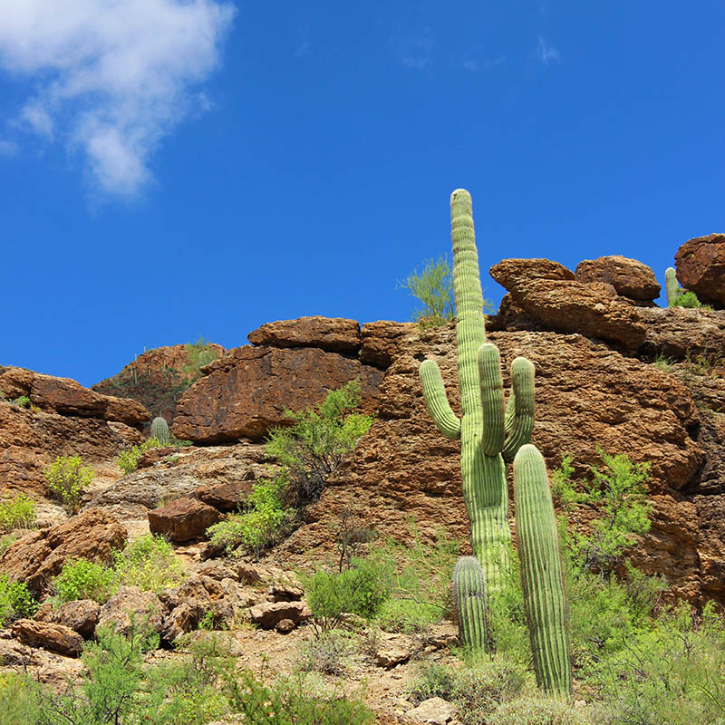 The Family That Hikes Saguaro taken by Southwest Discovered