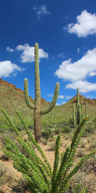The Welcoming Saguaro taken by Southwest Discovered