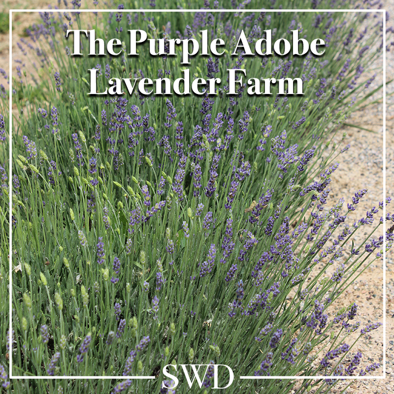 Purple Adobe Lavender Farm - Abiquiu, New Mexico | Southwest